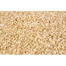 Short Grain Brown Rice 11.34 KG