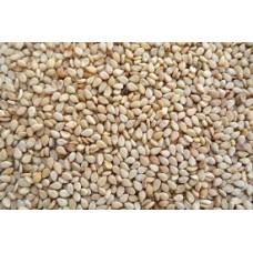 Sesame Seeds, Natural 11.34 KG
